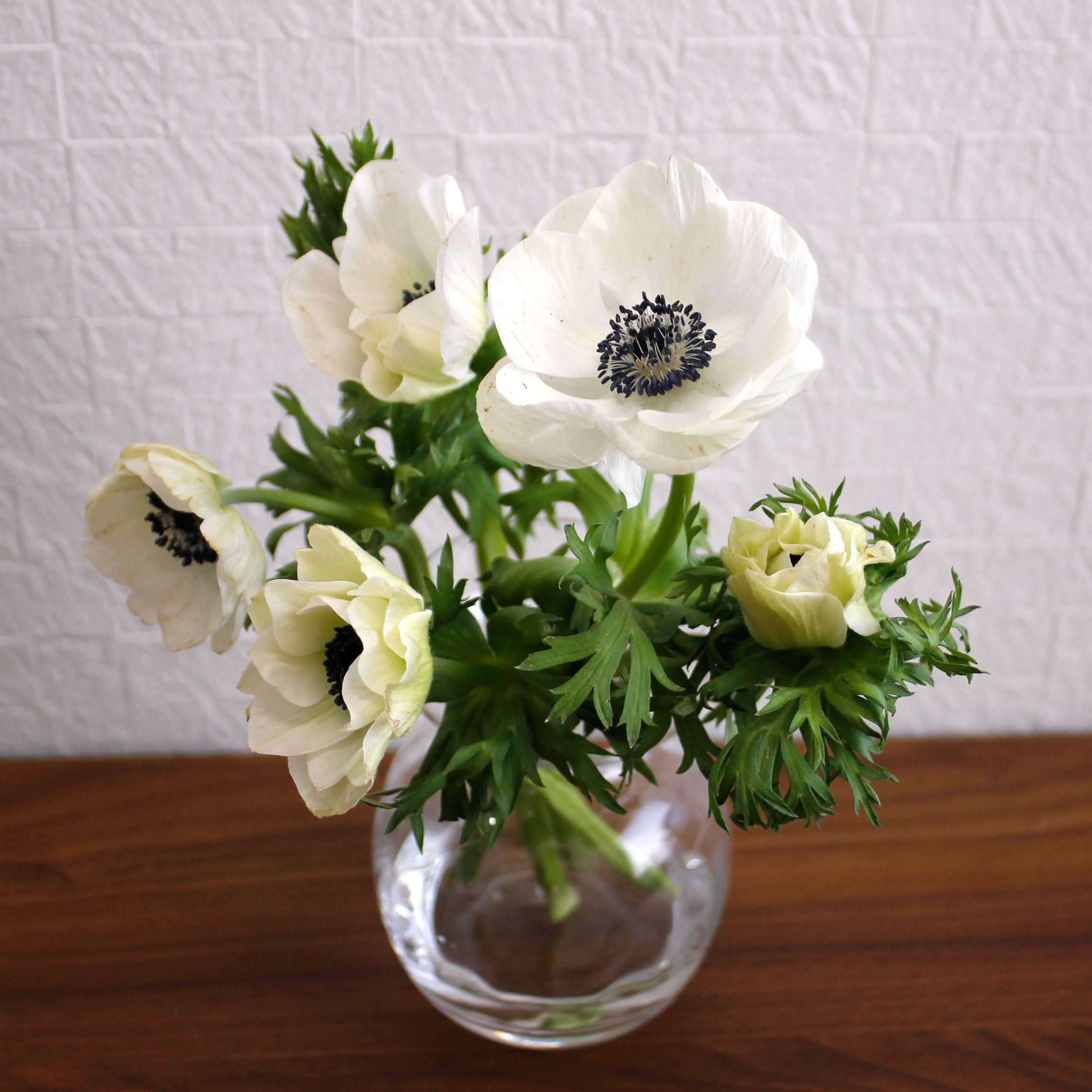 おうち花飾りのススメ アネモネ   はなどんやマガジン