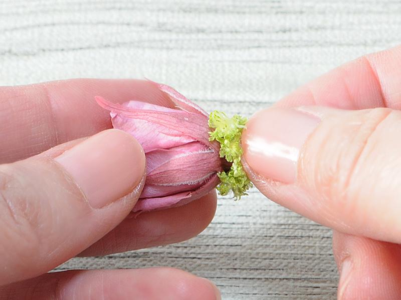 バラにクリスパムを貼る